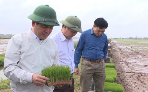 Bí thư Tỉnh uỷ kiểm tra tình hình sản xuất nông nghiệp huyện Kiến Xương và Tiền Hải