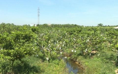 Hiệu quả tích tụ ruộng đất xã Tân Hòa