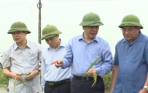 Đồng chí Bí thư Tỉnh ủy kiểm tra sản xuất nông nghiệp tại Thái Thụy và Tiền Hải
