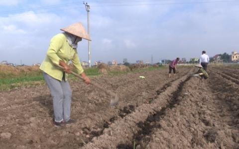 Trồng cây vụ đông – Thế mạnh về phát triển kinh tế nông nghiệp