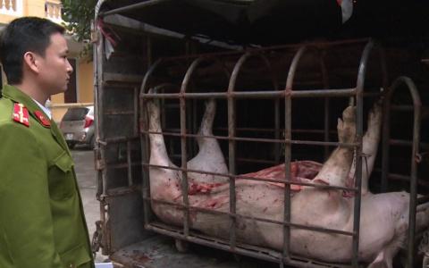 Bắt giữ xe ô tô vận chuyển thịt lợn không rõ nguồn gốc