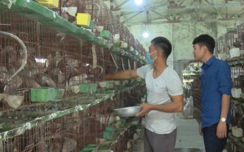 Thanh niên làm giàu từ chăn nuôi trang trại