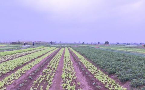 Giải pháp hỗ trợ Tổ hợp tác sản xuất rau an toàn