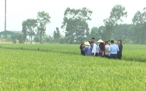 Kiểm tra tình hình sâu bệnh tại 1 số địa phương trong tỉnh