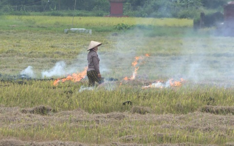 Tái diễn tình trạng đốt rơm rạ khiến môi trường bị ô nhiễm