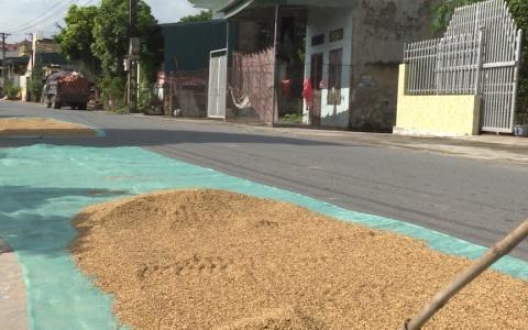 Phơi thóc lúa trên đường gây mất an toàn giao thông