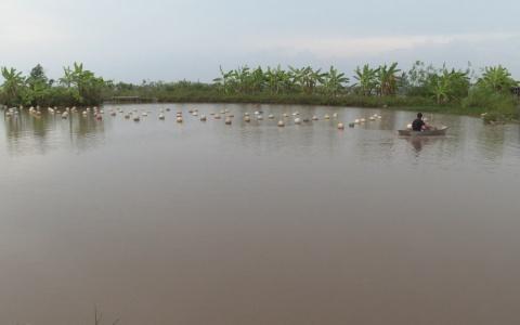 Độc đáo mô hình nuôi trai nước ngọt lấy ngọc