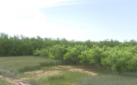 Thái Bình thực hiện Chỉ thị 13 về công tác quản lý bảo vệ và phát triển rừng