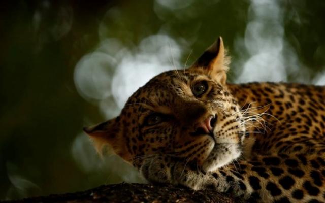 Những bức ảnh thiên nhiên và động vật hoang dã đẹp nhất năm 2018
