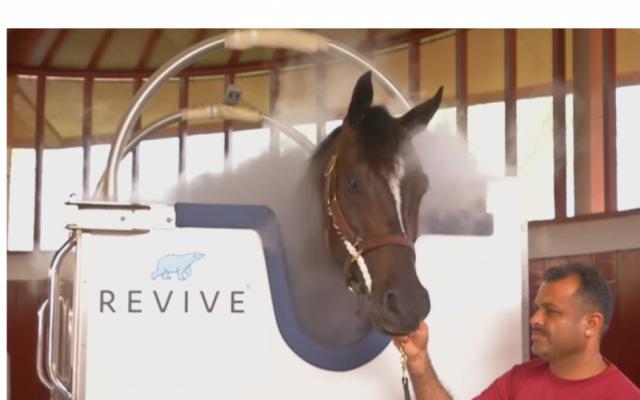 """""""Tắm lạnh"""" giúp ngựa đua nhanh hơn"""