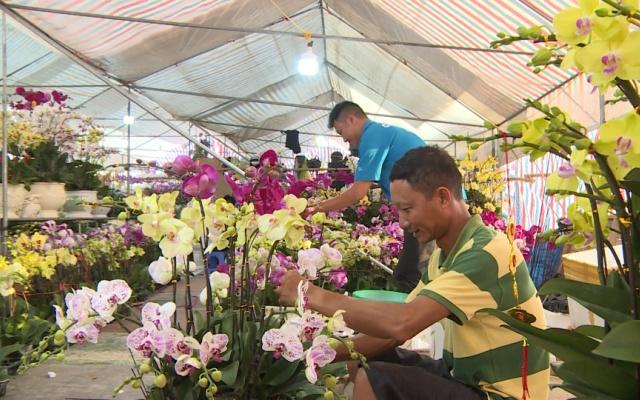 Sôi động thị trường hoa lan ngày Tết