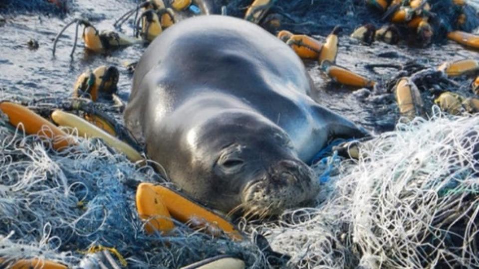 Kết quả hình ảnh cho rác thải nhựa tuổi thọ